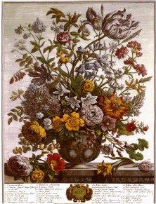 Robert-furber-twelve-months-of-flowers-1730-may cropped