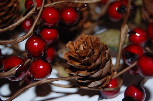 Fir_cone_and_Berries